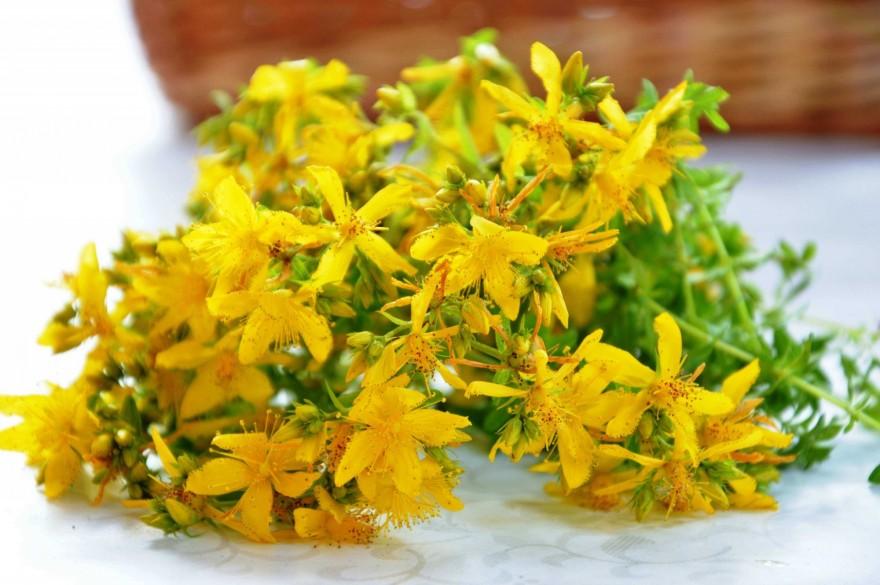 گل راعی یا هوفاریقون