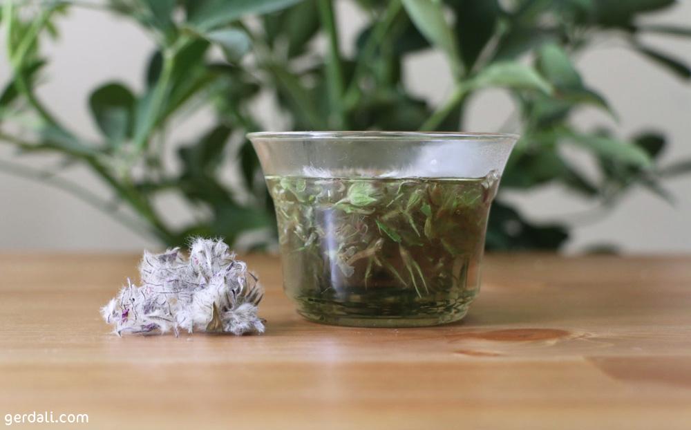 اثر درمانی چای کوهی